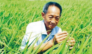 潍坊袁隆平现代高效数字化海水(盐碱)稻示范园区